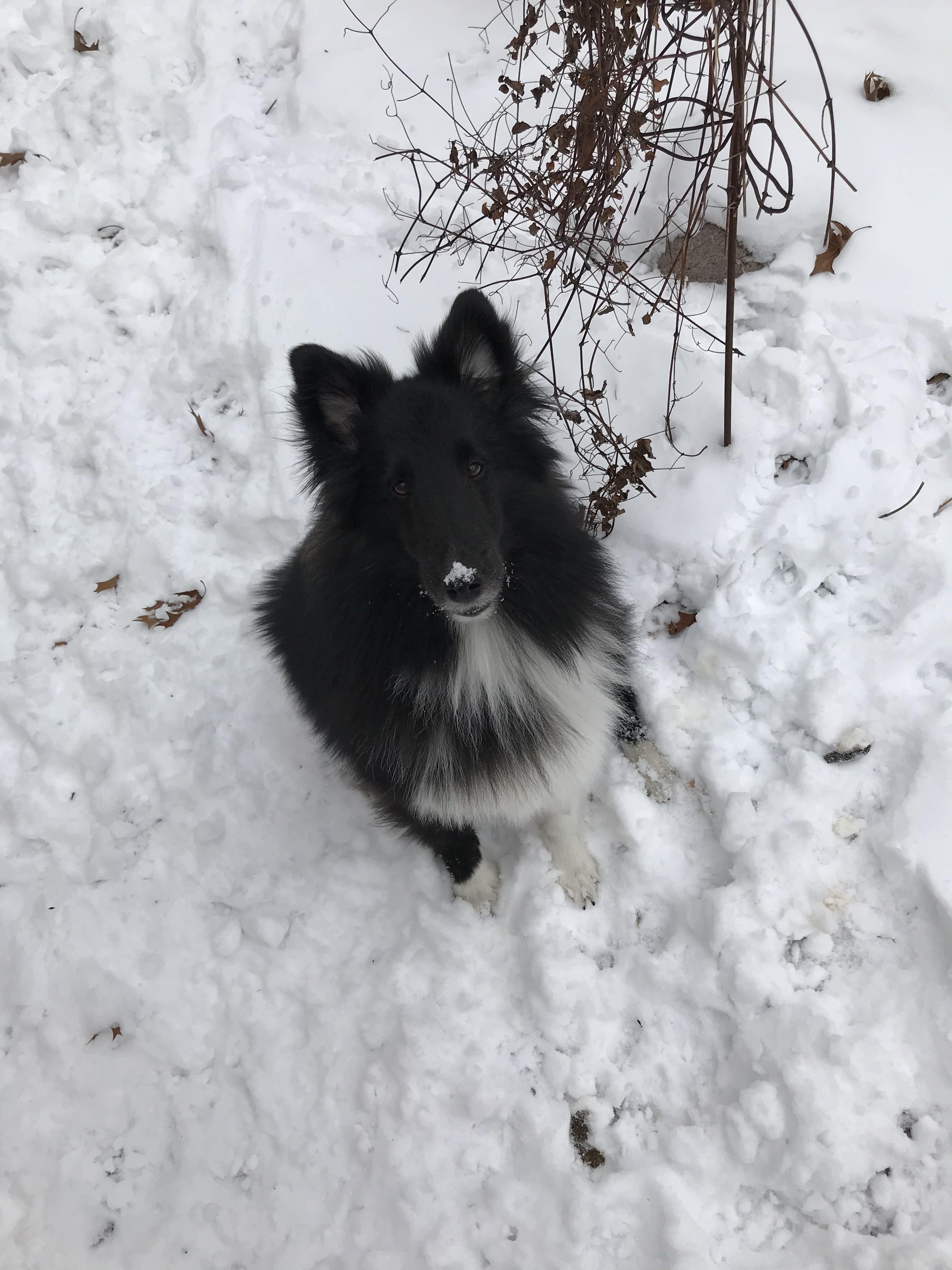 asha loves the snow
