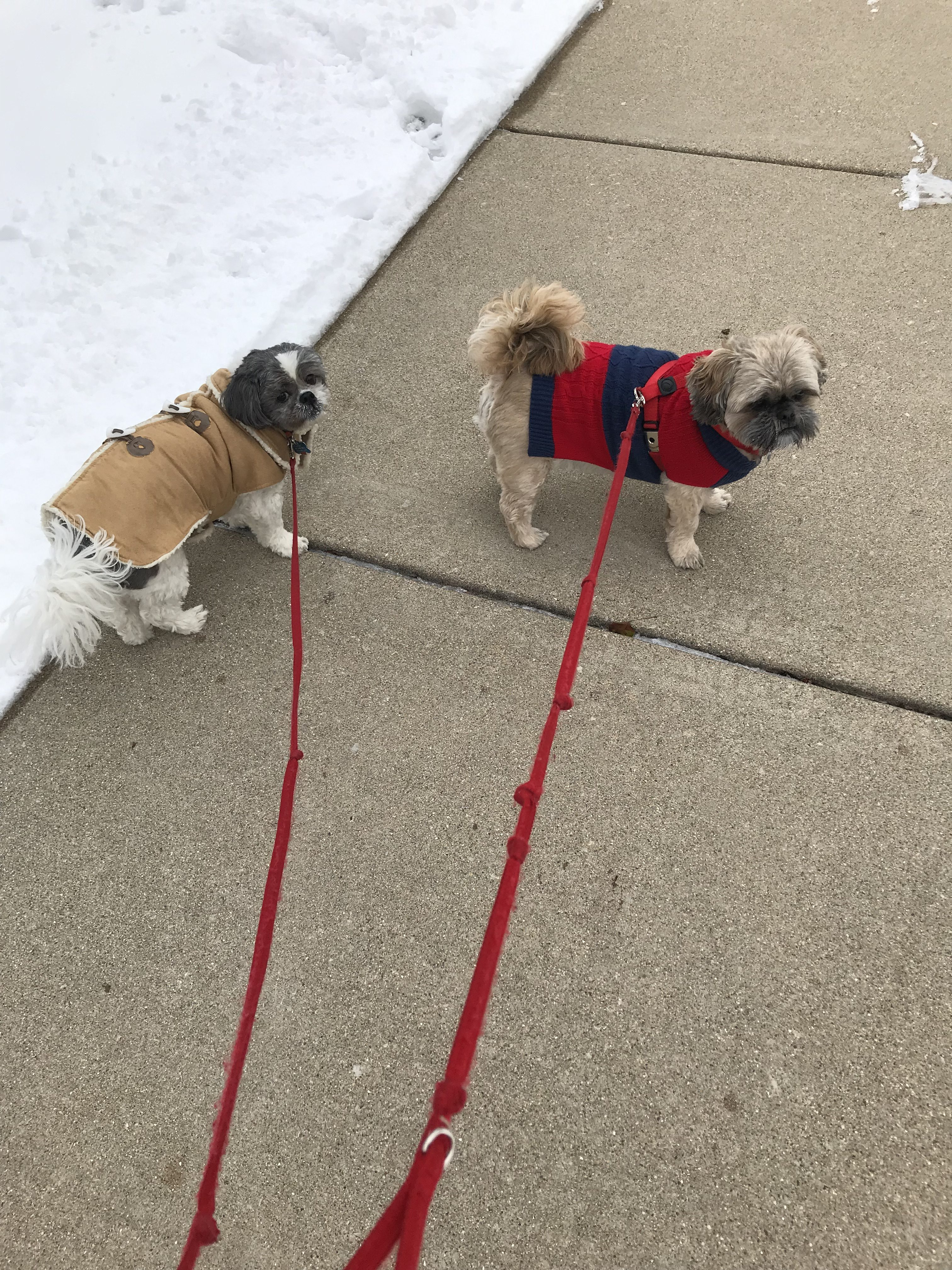 bo and scooter getting out on a cold day